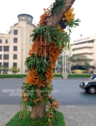 Trees lining Radjadamnoen Road also receive 'grafted' floral tributes.