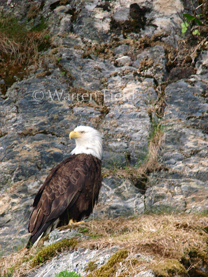 Location 2: Bald Eagle
