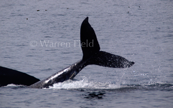 Location 5: Humpback Whale