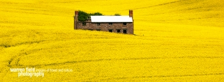 Canola Meadowcopy